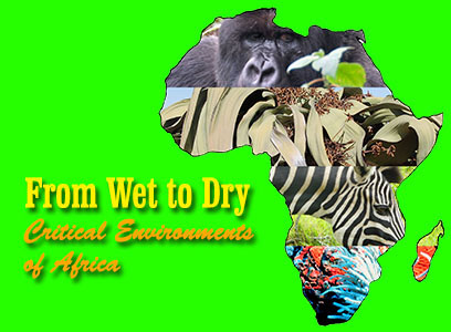 African environments exhibit cover photo
